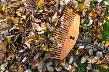Spring & Fall Cleanup